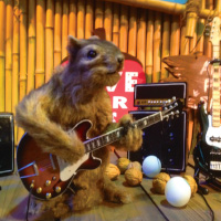 Squirrel Guitar Player